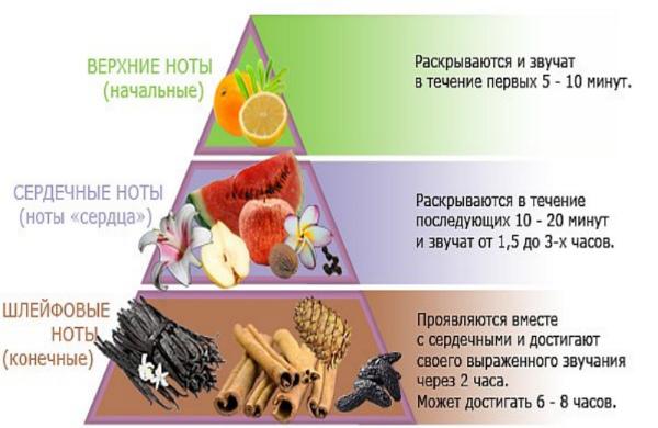 пирамида аромата